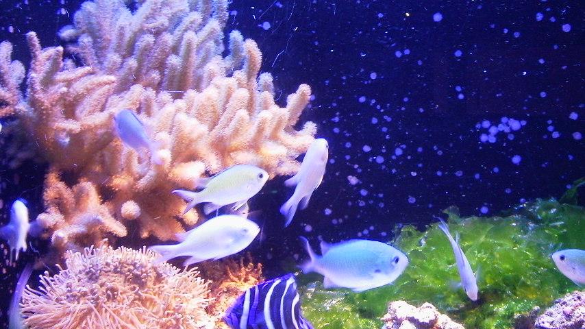 ちゅらうみ水族館のおさかなたち