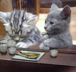 右の猫ちゃんの右手のとっくりは一体!?