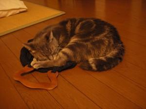 布バッグの上で熟睡中、五輪の応援疲れを癒してくれるチルル君